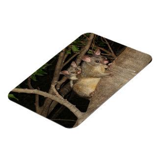 Brushtail Possums Rectangular Photo Magnet