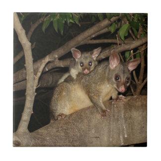 Brushtail Possums Tile
