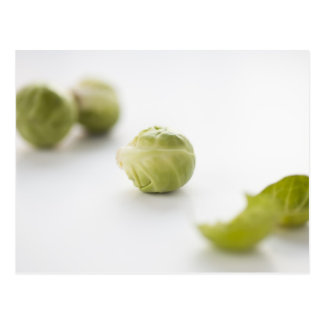 Brussel Sprout Postcard
