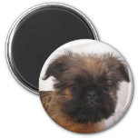 Brussell Griffon Magnet