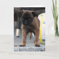 brussels griffon front view card