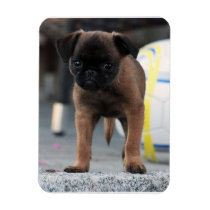 brussels griffon front view magnet