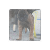 brussels griffon front view stone magnet