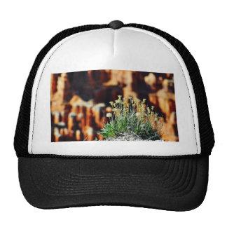 Bryce Canyon Rim Mesh Hat