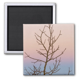 Bryce Canyon, Utah. Bare tree in front of sunset Magnet