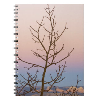 Bryce Canyon, Utah. Bare tree in front of sunset Notebook