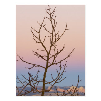 Bryce Canyon Utah Bare tree in front of sunset Post Cards