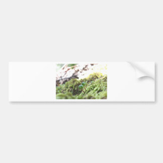 Bryophyta Umbrellas Bumper Sticker