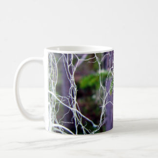 Bryoria capillaris mugs
