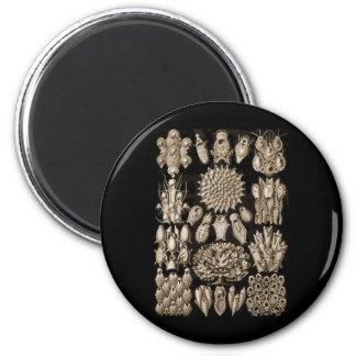 Bryozoa 2 Inch Round Magnet