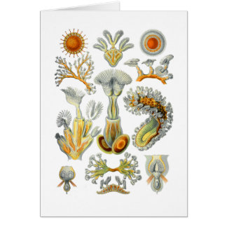 Bryozoa Cards