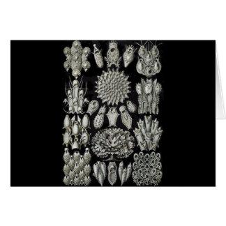 Bryozoa Greeting Cards