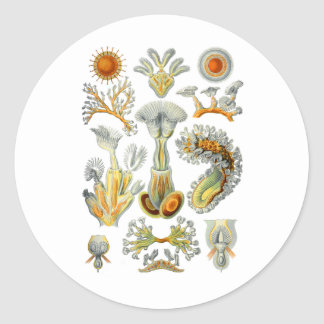Bryozoa Classic Round Sticker