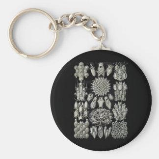 Bryozoa Keychain