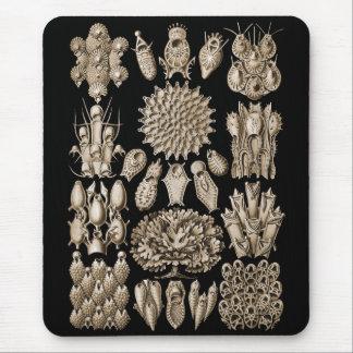 Bryozoa Mouse Pad