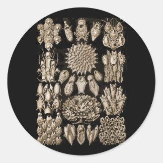 Bryozoa Pegatinas