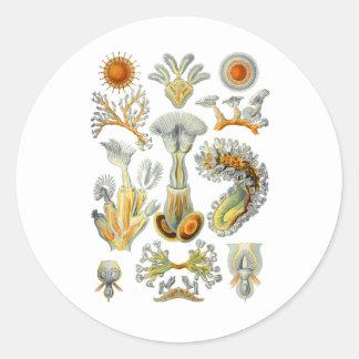 Bryozoa Pegatina Redonda