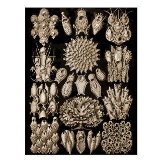 Bryozoa Postcard