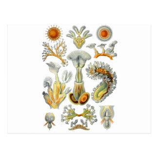 Bryozoa Postcards