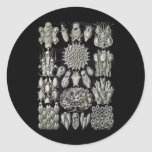 Bryozoa Round Sticker