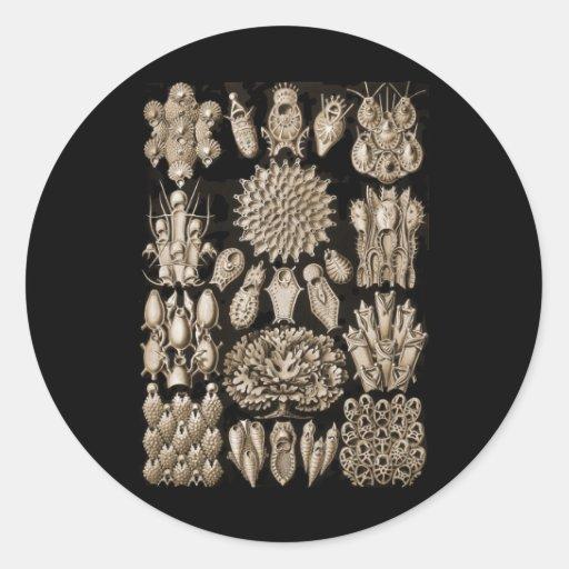 Bryozoa Stickers