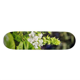 Bsail floreciente skate boards
