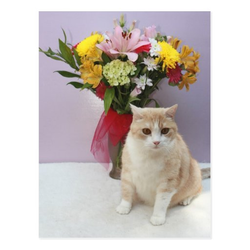Bubba by Flowers Postcard