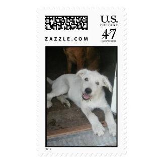 Bubba Postage