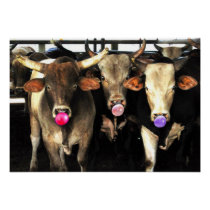Bubble Gum Blowing Rodeo Bull Cows Western Art Poster