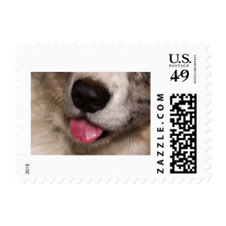 Bubble Mouth Postage Stamp