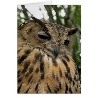 Bubo Bubo- The Eagle Owl Series Greeting Cards