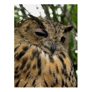 Bubo Bubo- The Eagle Owl Series Postcard