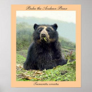 Bubu el oso andino en Yanahurco, Ecuador Póster