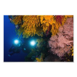 Buceador y corales suaves en la gran barrera de fotografía