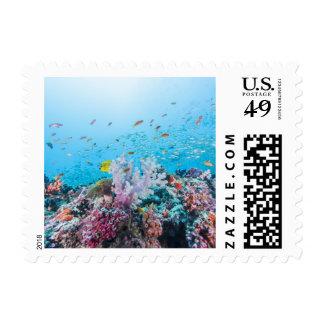 Buceo con escafandra con el filón y el coral estampillas