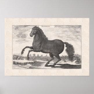 Bucephalus, Alexander el gran caballo preferido Posters