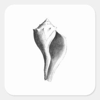 Bucino canalizado (línea arte) pegatina cuadrada