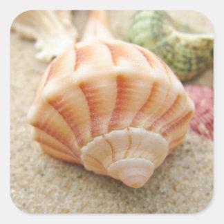 Bucino rayado del relámpago de Shell del mar Pegatina Cuadrada