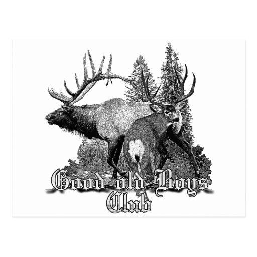 Buck and bull wildlife postcard
