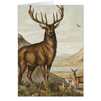 Buck and Deer Card