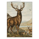 Buck and Deer Greeting Cards