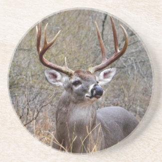 Buck Coaster