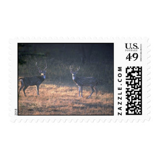 Buck confrontation at dawn postage stamps