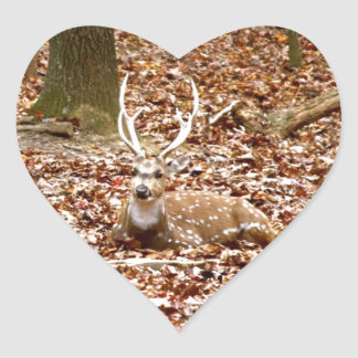 Buck Deer Antlers Spotted Male    Forest Animals Heart Sticker