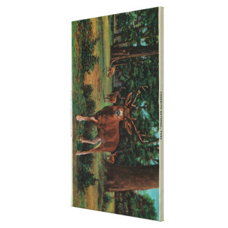 Buck Deer at Yosemite National Park Gallery Wrap Canvas