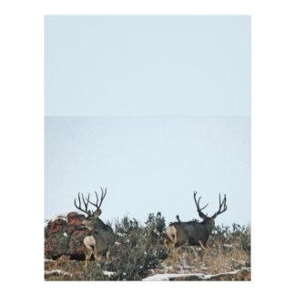 Buck deer first snow letterhead