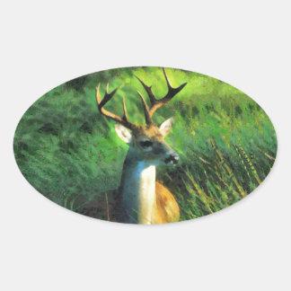 Buck Deer Oval Sticker