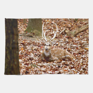 Buck Deer Spotted Male With Antlers | Fall Forest Hand Towels