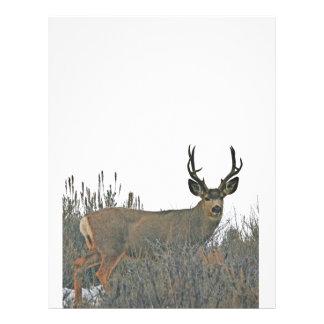 Buck deer w letterhead