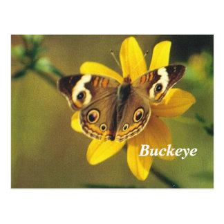 Buck eye postcard
